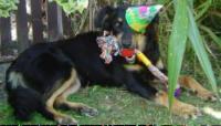 birthday dog,happy dog,happy