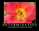 perseverance,