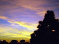 tree again sky